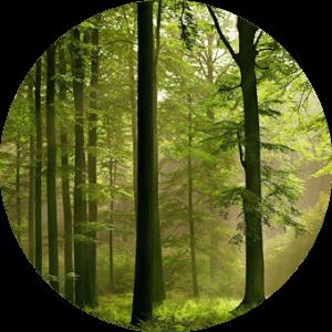 respect des forêts